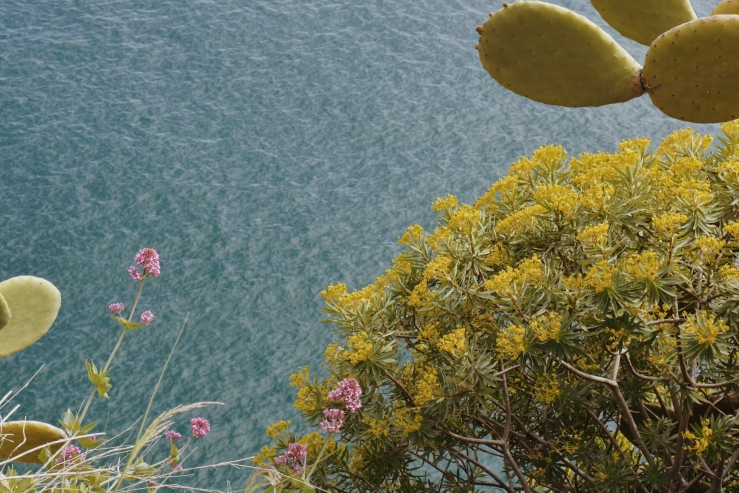 Natura e mare a Corniglia
